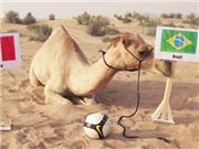 VIDEO: Rùa, lạc đà, lợn, voi... dự đoán kết quả World Cup như thế nào?