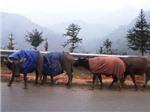 Lào Cai hứng chịu giá lạnh sớm nhất nước