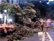 Hà Nội yêu cầu rà soát, thay thế hệ thống cây xanh