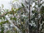 Băng tuyết xuất hiện nhiều, du khách ùn ùn kéo lên Sa Pa