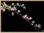 Ảnh môi trường: Hoa cỏ mùa xuân