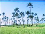 """Biển đảo phát triển theo định hướng """"Kinh tế xanh lam"""""""