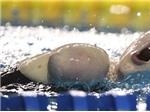 Nhà vô địch bơi lội không có chân tay
