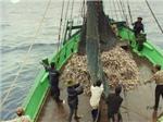 Kiên Giang phát triển bền vững nghề nuôi thủy sản ven biển đảo