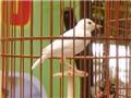 Chuyện về các loài chim