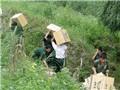 Phó Thủ tướng: Đẩy mạnh ngăn chặn buôn lậu, hàng giả