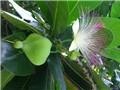 Món quà đặc sản của Côn Đảo