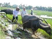 Tây thích thú làm nông dân Việt