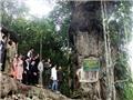 Cây gỗ nghiến 1000 năm tuổi được công nhận Cây di sản Việt Nam