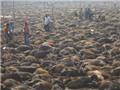 Lễ hội chém lợn & chuyện yêu, ghét quanh lễ hiến tế động vật