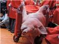 Lễ hội chém lợn: Không thể cấm bằng văn bản hành chính