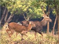 Xây dựng Công viên động vật hoang dã Quốc gia tại Ninh Bình
