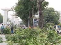 Chuyện Hà Nội: Chia tay những hàng cây
