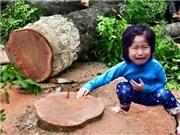 Đề án 6.700 cây xanh Hà Nội