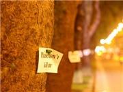 Clip Câu chuyện của một cái cây: 'Tự bạch' của Cây xanh Hà Nội