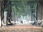 Hàng ngàn người làm phim về cây xanh Hà Nội