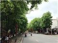 Ông Nguyễn Văn Cẩn - Giám đốc Trung tâm Công viên cây xanh: 'Hồ sơ dự án chỉ để tham khảo nội bộ'
