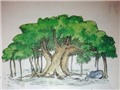 Hỏi cây bao nhiêu tuổi?