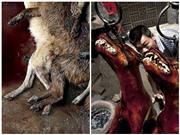 Những bức ảnh 'đẫm máu' về lễ hội thịt chó ở Trung Quốc