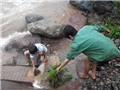 Lai Châu: Bất chấp lũ nguy hiểm ra suối đãi vàng