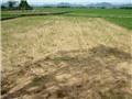 Cấp 904 tấn gạo cứu đói 1 tháng cho cho hơn 60 ngàn nhân khẩu ở  Bình Định