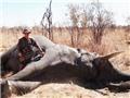 Thêm một bác sĩ Mỹ bị tố giết sư tử bất hợp pháp ở Zimbabwe