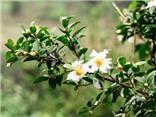 Quảng Ninh lần đầu tiên tổ chức lễ hội hoa Sở