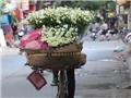 Hà Nội: Dịu dàng mùa cúc họa mi xuống phố