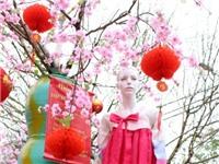Chơi đào 'fake' ở Nhật Tân và sự ngơ ngẩn văn hóa Việt!