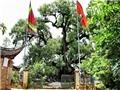 'Rước' mầm Dã hương nghìn tuổi về nhà trong Tết trồng cây