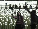Valetine ở Hong Kong sáng rực với 25.000 bông hồng bằng đèn LED