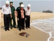 Mua được rùa biển nặng 6,3kg, nhà hàng quyết định phóng sinh