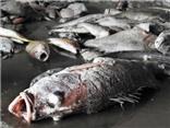 Thận trọng để biển khỏi bị 'đầu độc' thêm lần nữa…