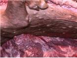 KINH HOÀNG: Mua lợn chết về mổ thịt cấp đông, nấu mỡ, tóp mỡ