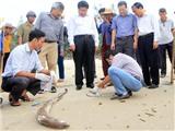 Cá chết ở miền Trung: Tổng Cục du lịch yêu cầu đảm bảo vệ sinh an toàn thực phẩm