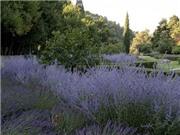 Ghé thăm vườn tình yêu và cầu tình nhân ở Pháp