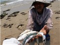 VIDEO: Tổng hợp sự cố cá chết hàng loạt ở miền Trung do Formosa gây ra