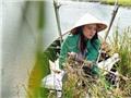 Phan Như Thảo bụng bầu 6 tháng ra mắt phim 'Bồng bềnh trên sông'