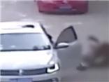 VIDEO sốc: Hổ vồ người ở công viên ngoại ô Bắc Kinh