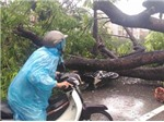 Cơn bão số 1: Đường phố Hà Nội, Hải Phòng, Thái Bình tan hoang cây đổ