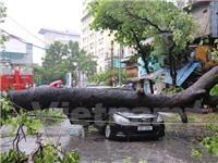 Hà Nội: Ô tô bị cây to đổ đè bẹp trên phố Núi Trúc