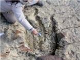 VIDEO: Phát hiện dấu chân khủng long dài 1,2m cách đây khoảng 80 triệu năm