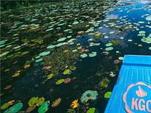 Chùm ảnh du lịch: Cùng Hoàng Thùy Linh khám phá rừng tràm Tân Lập đẹp ngất ngây