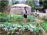 Mỹ Linh trồng rau, nuôi cá, thả gà tại trang trại ở Sóc Sơn