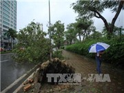Hà Nội di chuyển hàng trăm cây xanh trên đường Kim Mã