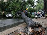 TP HCM mưa lớn, cây đổ sát cổng trường đè ô tô, nhiều phụ huynh thoát nạn