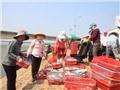 Tạm ứng 3.000 tỷ bồi thường cho ngư dân 4 tỉnh miền Trung