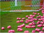 CĐV Anh ném... 3.000 con lợn đồ chơi xuống sân để phản đối ông chủ CLB