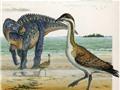 Nghe lại được 'tiếng hót' của loài chim 'thủy tổ' cách đây 70 triệu năm