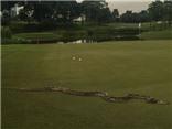 Trăn dài 2 mét 'ĐẠI NÁO' giải golf PGA Tour ở Malaysia
